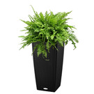 Floor container 30 x 30 cm / H 55 cm – with fern